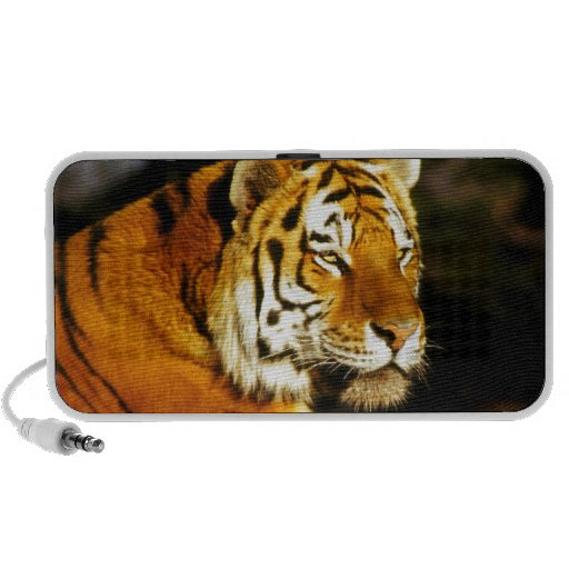 Siberian Tiger in the evening Laptop Speakers
