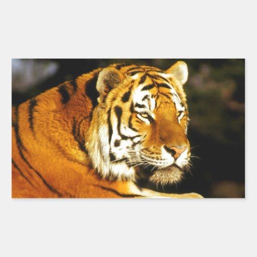 Siberian Tiger in the evening Rectangular Sticker