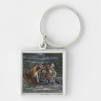 Siberian Tiger In Water Keychain
