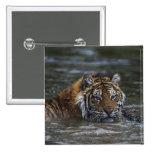 Siberian Tiger In Water Pinback Button