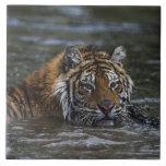 Siberian Tiger In Water Tile