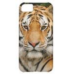 Siberian Tiger iPhone 5 case