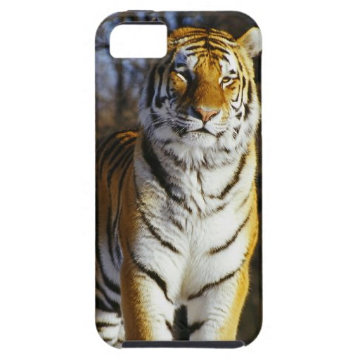 Siberian Tiger iPhone 5 Cases