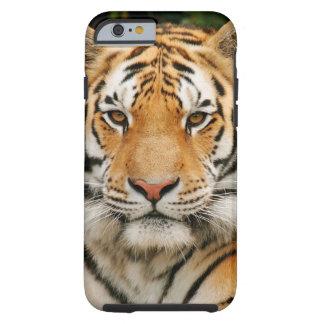 Siberian Tiger iPhone 6 case