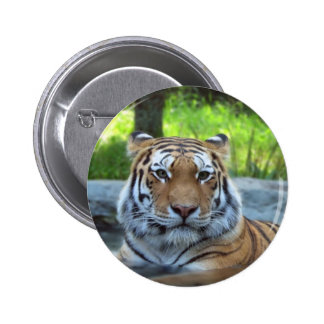 Siberian tiger King Confidence and Calm Buttons