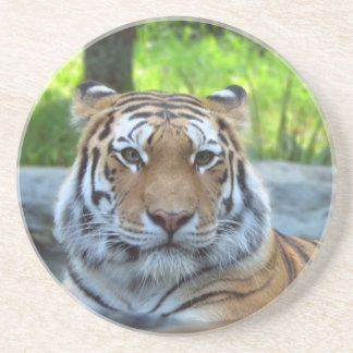 Siberian tiger King Confidence and Calm Beverage Coaster