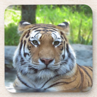Siberian tiger King Confidence and Calm Drink Coasters