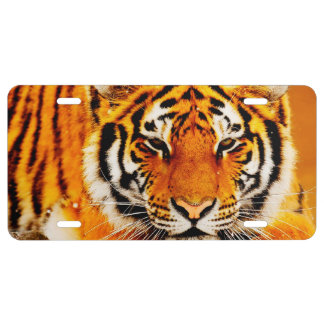 Siberian Tiger License Plate