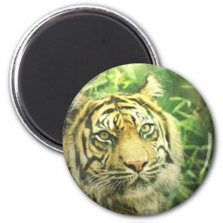 Siberian Tiger Magnet Magnets