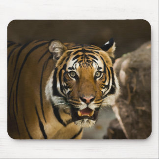 Siberian Tiger Mouse Pad