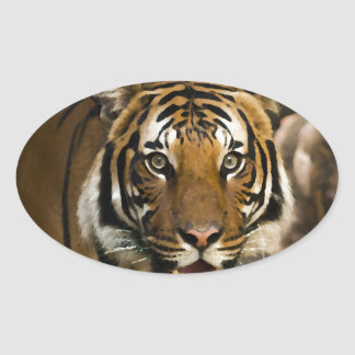 Siberian Tiger Oval Sticker