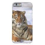 Siberian Tiger, Panthera tigris altaica, Asia, Barely There iPhone 6 Case