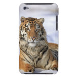 Siberian Tiger, Panthera tigris altaica, Asia, Barely There iPod Covers