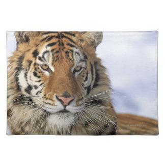 Siberian Tiger, Panthera tigris altaica, Asia Cloth Placemat