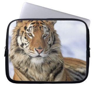 Siberian Tiger, Panthera tigris altaica, Asia, Computer Sleeve