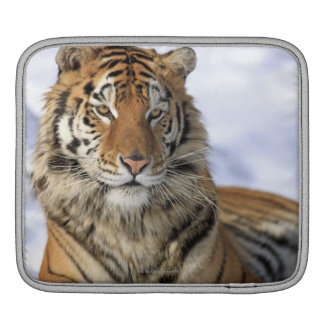 Siberian Tiger, Panthera tigris altaica, Asia Sleeve For iPads
