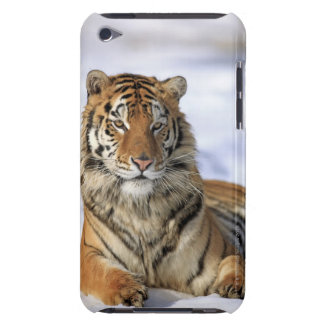 Siberian Tiger, Panthera tigris altaica, Asia, iPod Case-Mate Case