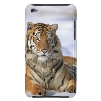 Siberian Tiger, Panthera tigris altaica, Asia, iPod Touch Cases