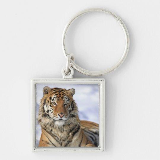 Siberian Tiger, Panthera tigris altaica, Asia Keychain