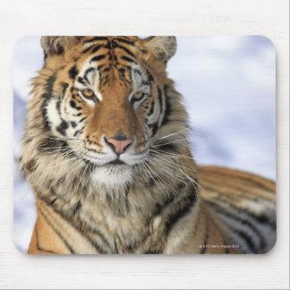 Siberian Tiger, Panthera tigris altaica, Asia Mouse Pad