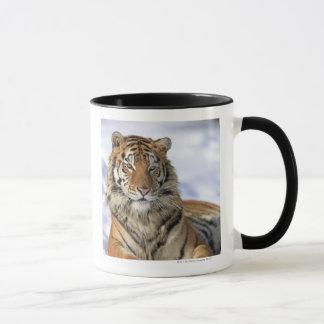 Siberian Tiger, Panthera tigris altaica, Asia Mug