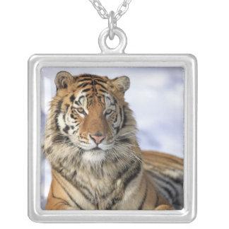 Siberian Tiger, Panthera tigris altaica, Asia, Square Pendant Necklace