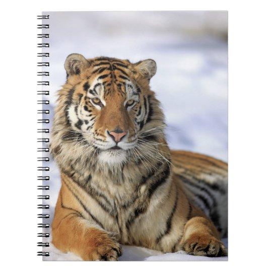 Siberian Tiger, Panthera tigris altaica, Asia Notebook