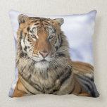 Siberian Tiger, Panthera tigris altaica, Asia Throw Pillows