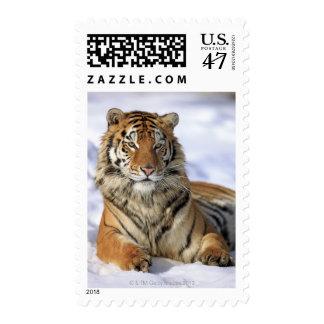 Siberian Tiger, Panthera tigris altaica, Asia, Postage Stamp