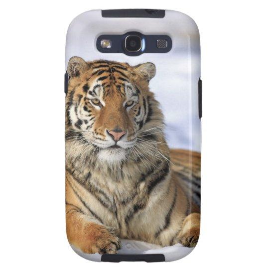 Siberian Tiger, Panthera tigris altaica, Asia, Samsung Galaxy SIII Case