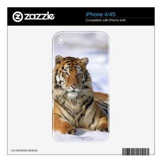 Siberian Tiger, Panthera tigris altaica, Asia iPhone 4S Decals