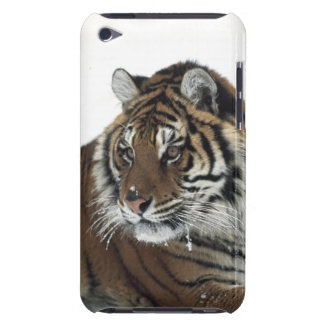 Siberian Tiger (Panthera Tigris Altaica) Barely There iPod Covers