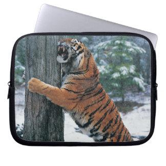 Siberian Tiger (Panthera tigris altaica) Laptop Computer Sleeve