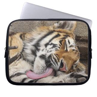 Siberian tiger Panthera tigris altaica licking Laptop Sleeve