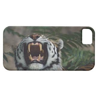 Siberian Tiger (Panthera Tigris) Bares Fangs iPhone SE/5/5s Case
