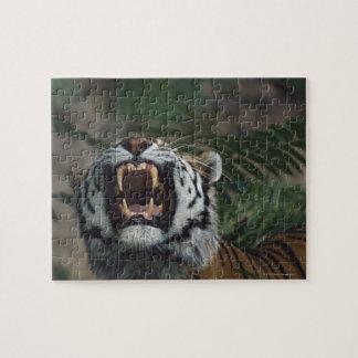 Siberian Tiger (Panthera Tigris) Bares Fangs Jigsaw Puzzle