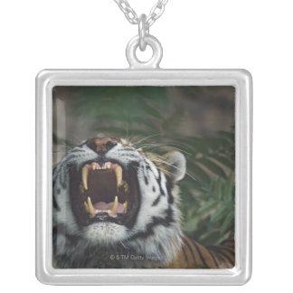 Siberian Tiger (Panthera Tigris) Bares Fangs Silver Plated Necklace