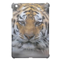 Siberian Tiger Photograph Cover For The iPad Mini