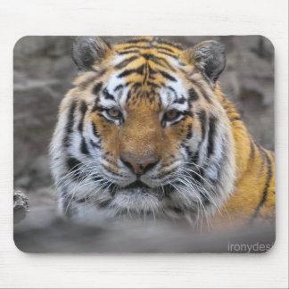 Siberian Tiger Photograph Mouse Pad
