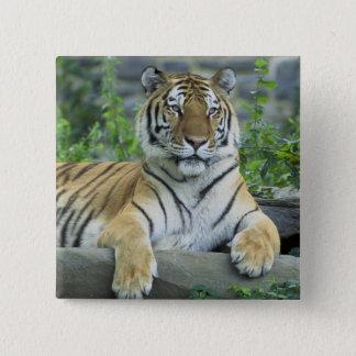 Siberian Tiger Pinback Button