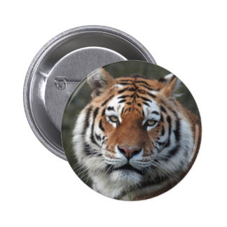 Siberian Tiger Portrait Pin