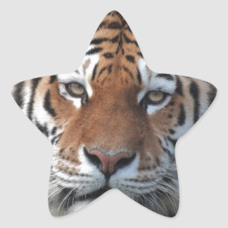 Siberian Tiger Portrait Star Sticker