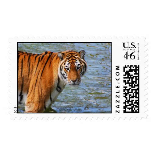 Siberian Tiger Stamps