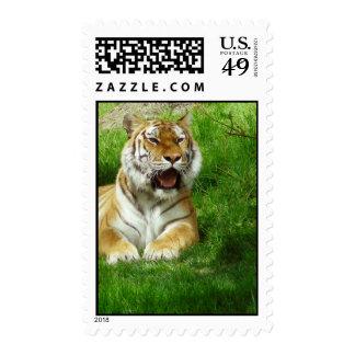 Siberian tiger Postage