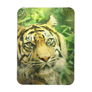 Siberian Tiger Premium Magnet Magnets