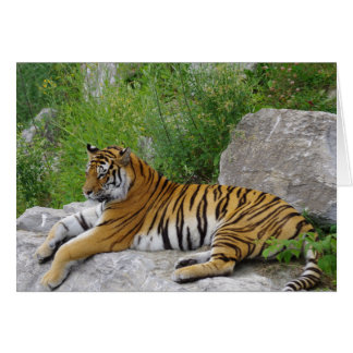 Siberian Tiger Relaxing on a Rock Card