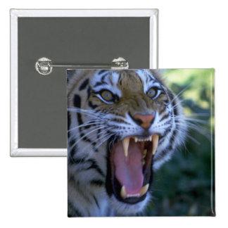 Siberian tiger roaring pins