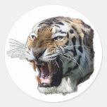 siberian tiger round sticker