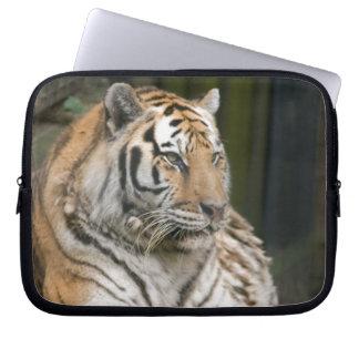 Siberian Tiger Tigress Computer Sleeve