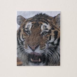 Siberian Tiger Yawning Jigsaw Puzzle